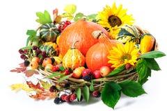 Harvesting arrangement of pumpkins Stock Photography