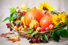 Harvesting arrangement of pumpkins. With autumn leaves Stock Photo