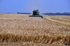 Harvesting of barley in agricultural farm POLIVTSI_2. Chortkiv - Ternopil - Ukraine - July 26, 2016. Collection of malting barley using powerful komayniv in Royalty Free Stock Image