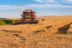 Harvesting barley in August Royalty Free Stock Images