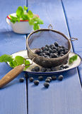Harvesting blueberries Royalty Free Stock Photo