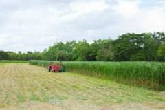 Harvest cane with machine Royalty Free Stock Photos