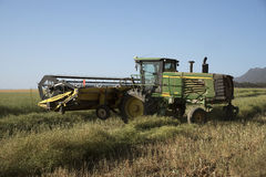 Harvesting Canola on a South African farm. Grain belt swather being used to harvest Canola in the Swartland S Africa Royalty Free Stock Image