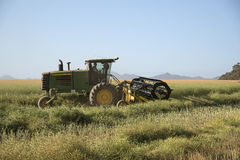 Harvesting Canola on a South African farm. Grain belt swather being used to harvest Canola in the Swartland S Africa Royalty Free Stock Images