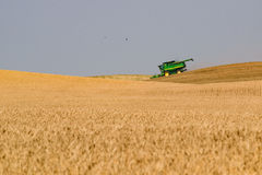Harvesting cereal crop Royalty Free Stock Images
