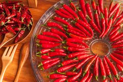 Free Harvesting Chilli Peppers. Preparing For Drying Spicy Seasoning. Electric Food Dryer. Royalty Free Stock Photography - 98385647