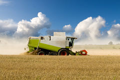 Harvesting Combine. Combine harvesting corn in a large field Royalty Free Stock Image