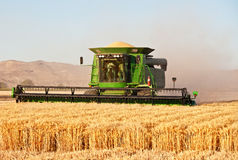Harvesting combine. At the wheat field Stock Image
