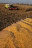 Harvesting combine Stock Photos