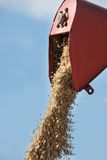 Harvesting combine emptying the grain. Harvesting combine cutting  different grain in the field during the  fall Royalty Free Stock Photos