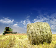 Harvesting combine in the field of wheat Royalty Free Stock Photography