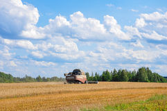 Harvesting combine gather wheat. A combine harvester working on the summer in a wheat field royalty free stock image
