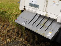 Harvesting of Combine harvester Royalty Free Stock Photo