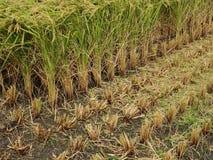 Harvesting of Combine harvester Stock Photos