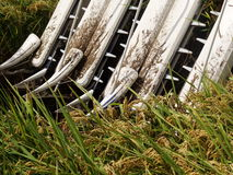 Harvesting of Combine harvester Stock Image