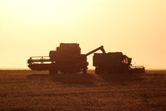 Harvesting by combines at sunset. Stock Photos