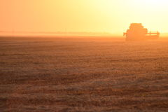 Harvesting by combines at sunset. Agricultural machinery in operation Stock Images