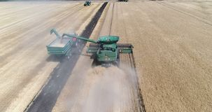 Harvesting by combines, wheat harvesting stock video
