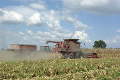 Harvesting Corn. A farmer harvests a corn crop using a combine Stock Images