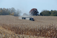 Combine Harvesting corn. Harvester offloading corn to hauler Stock Photos