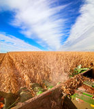 Harvesting corn. View from on the combine Royalty Free Stock Photo