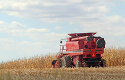 Harvesting Corn. Red combine harvesting a farm field of corn Royalty Free Stock Images