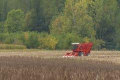 Harvesting corn. Red farm combine harvesting corn Stock Photo