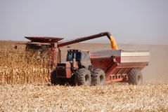Harvesting Corn Stock Photography