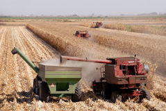 Harvesting Corn Stock Images