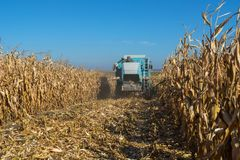 Harvesting corn by a combine on a field against a clean, blue sky.  royalty free stock photography