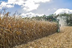 Harvesting corn by a combine harvester, followed by unloading and transportation of grain. Work in the field in the rays of the su. N in the early autumn royalty free stock photography