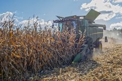 Harvesting corn by a combine harvester, followed by unloading and transportation of grain. Work in the field in the rays of the su. N in the early autumn stock photo