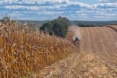 Harvesting corn by a combine harvester, followed by unloading and transportation of grain. Work in the field in the rays of the su. N in the early autumn royalty free stock images