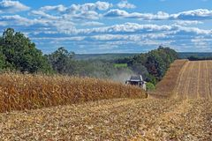 Harvesting corn by a combine harvester, followed by unloading and transportation of grain. Work in the field in the rays of the su. N in the early autumn stock image
