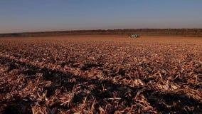 Harvesting corn stock footage