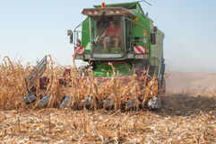 Harvesting corn Stock Photo