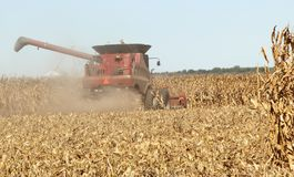 Harvesting a Corn Field Stock Images