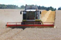 Harvesting the corn field Stock Photography