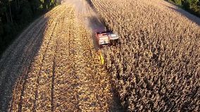 Harvesting a corn field stock video