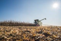 Harvesting of corn Stock Image
