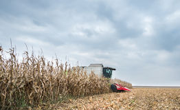 Harvesting of corn Royalty Free Stock Photography