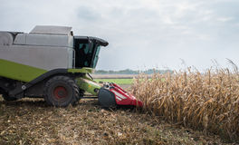 Harvesting of corn Stock Photography