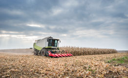 Harvesting of corn Royalty Free Stock Images