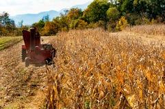 Harvesting corn field. Stock Photos