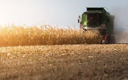 Harvesting of corn field with combine Royalty Free Stock Photos