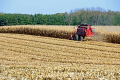 Harvesting corn field Stock Photo