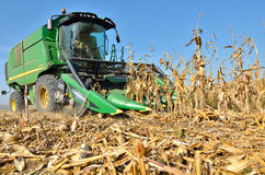 Harvesting the corn field Stock Photo