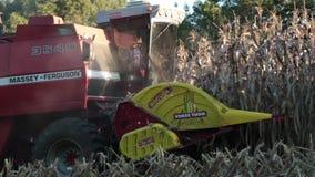 Harvesting a corn field stock video footage