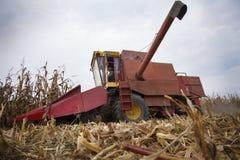 Harvesting corn maize Stock Image