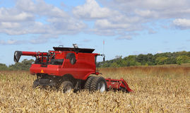 Harvesting Corn. Red combine picking corn in a farm field Royalty Free Stock Photos